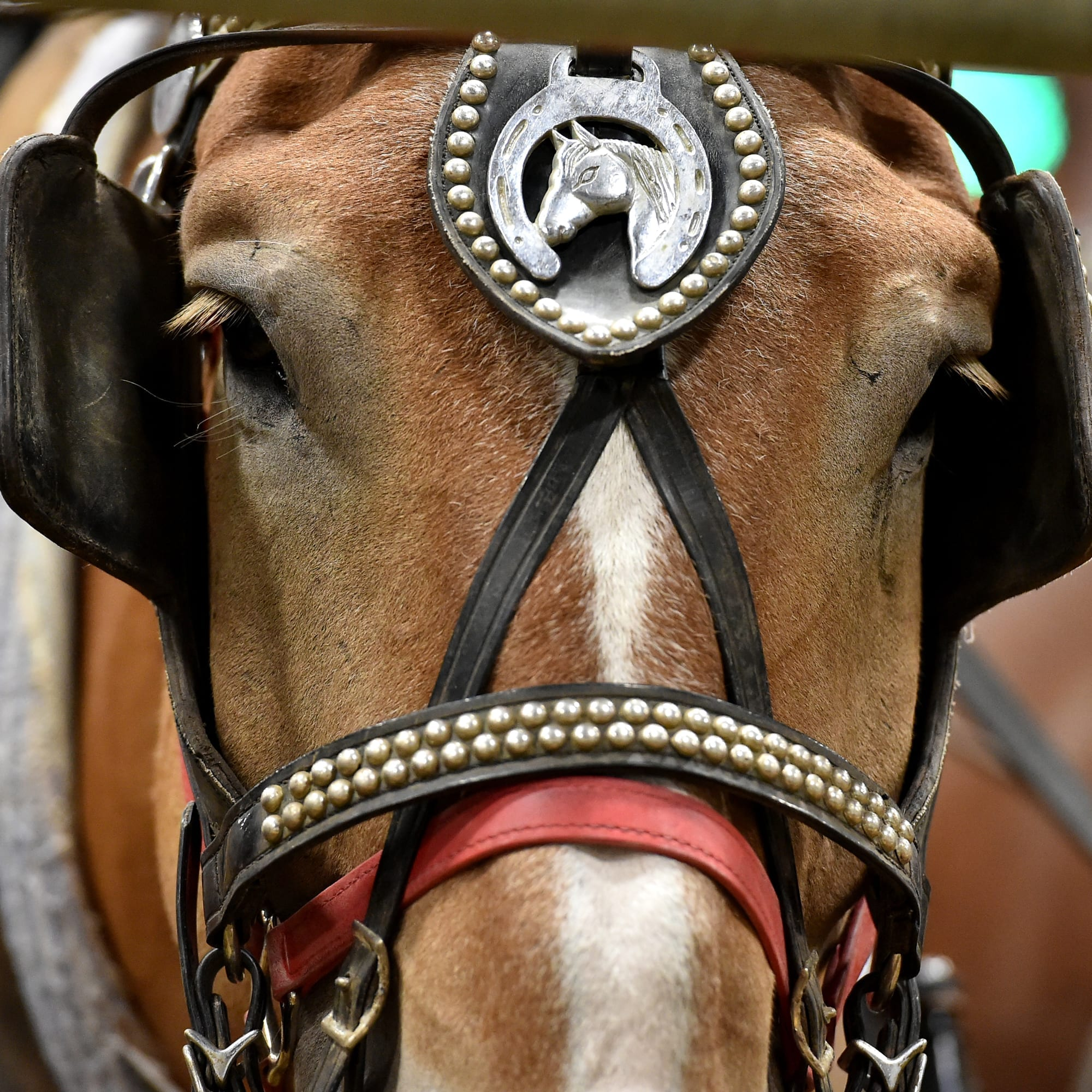 close up of a horse's face