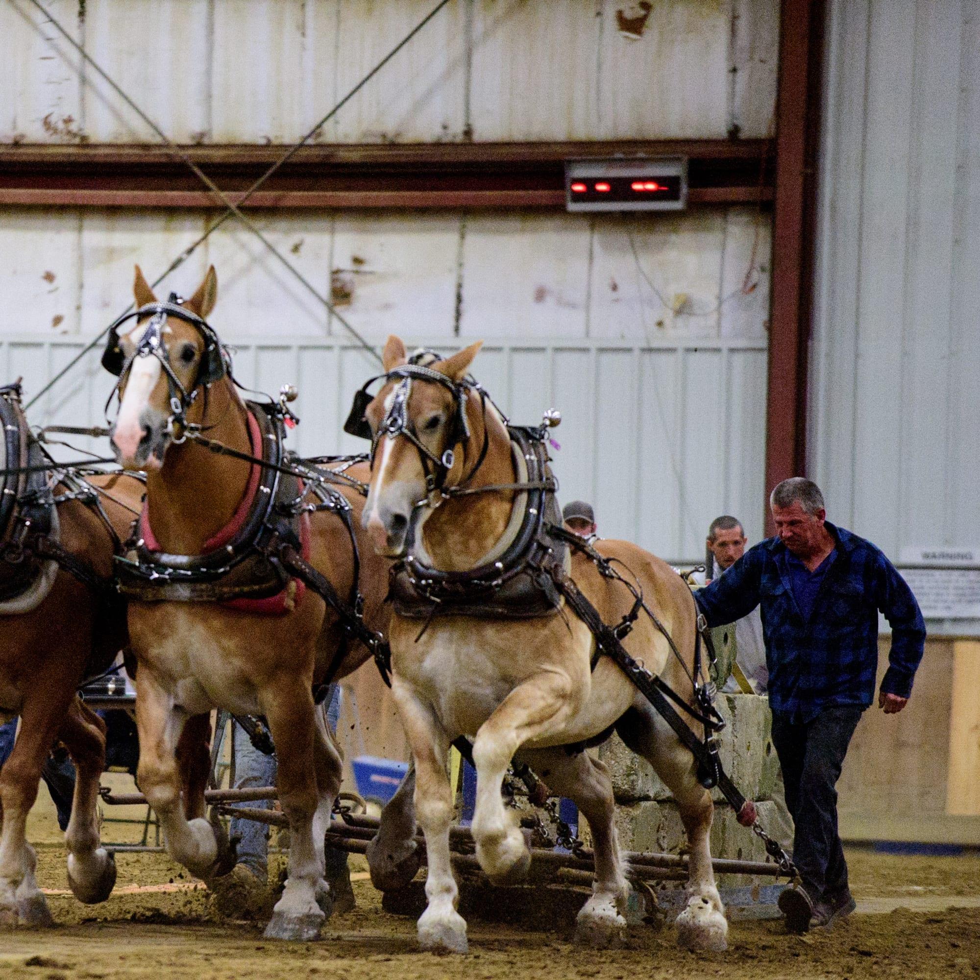 horses pulling cement