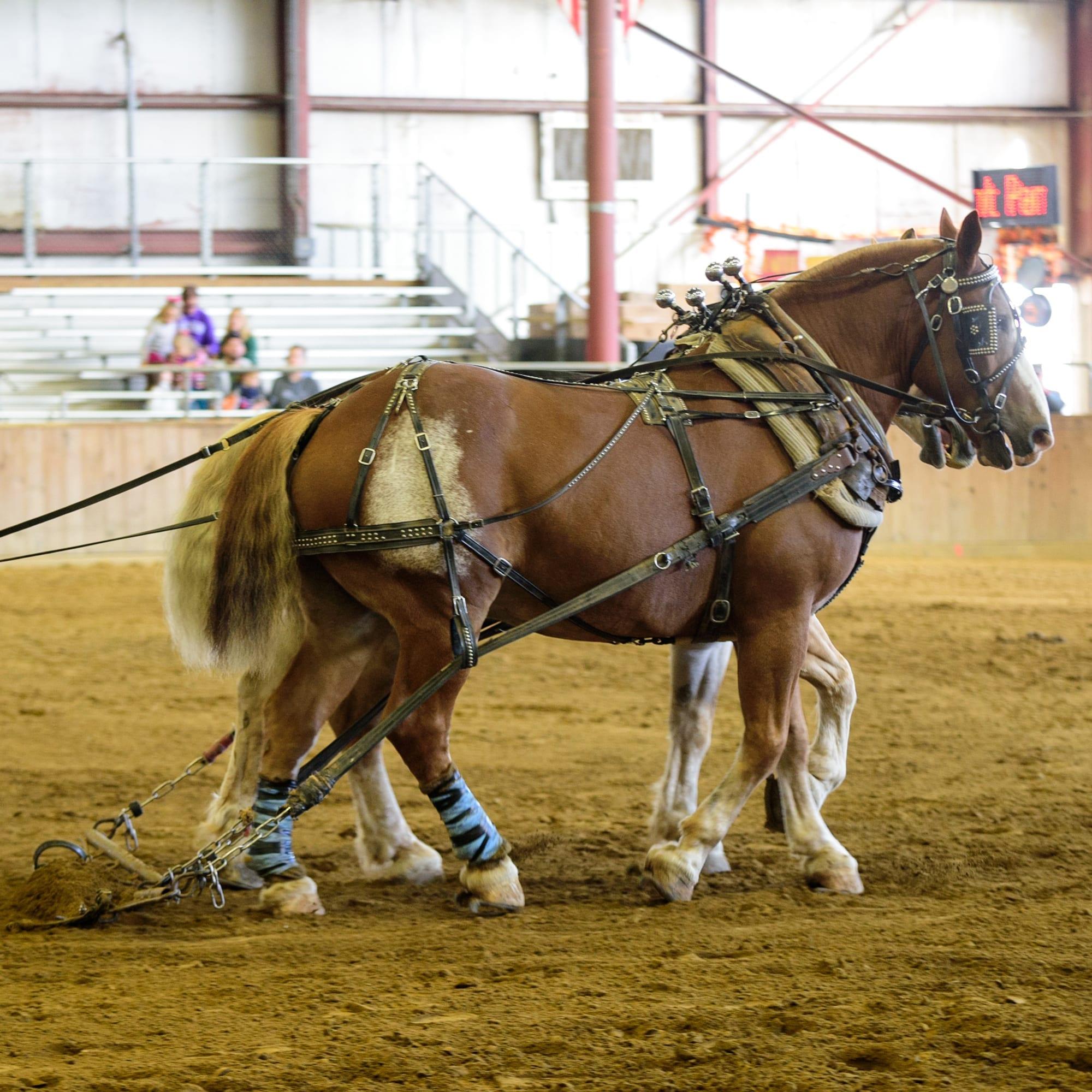 horses pulling heavy weight