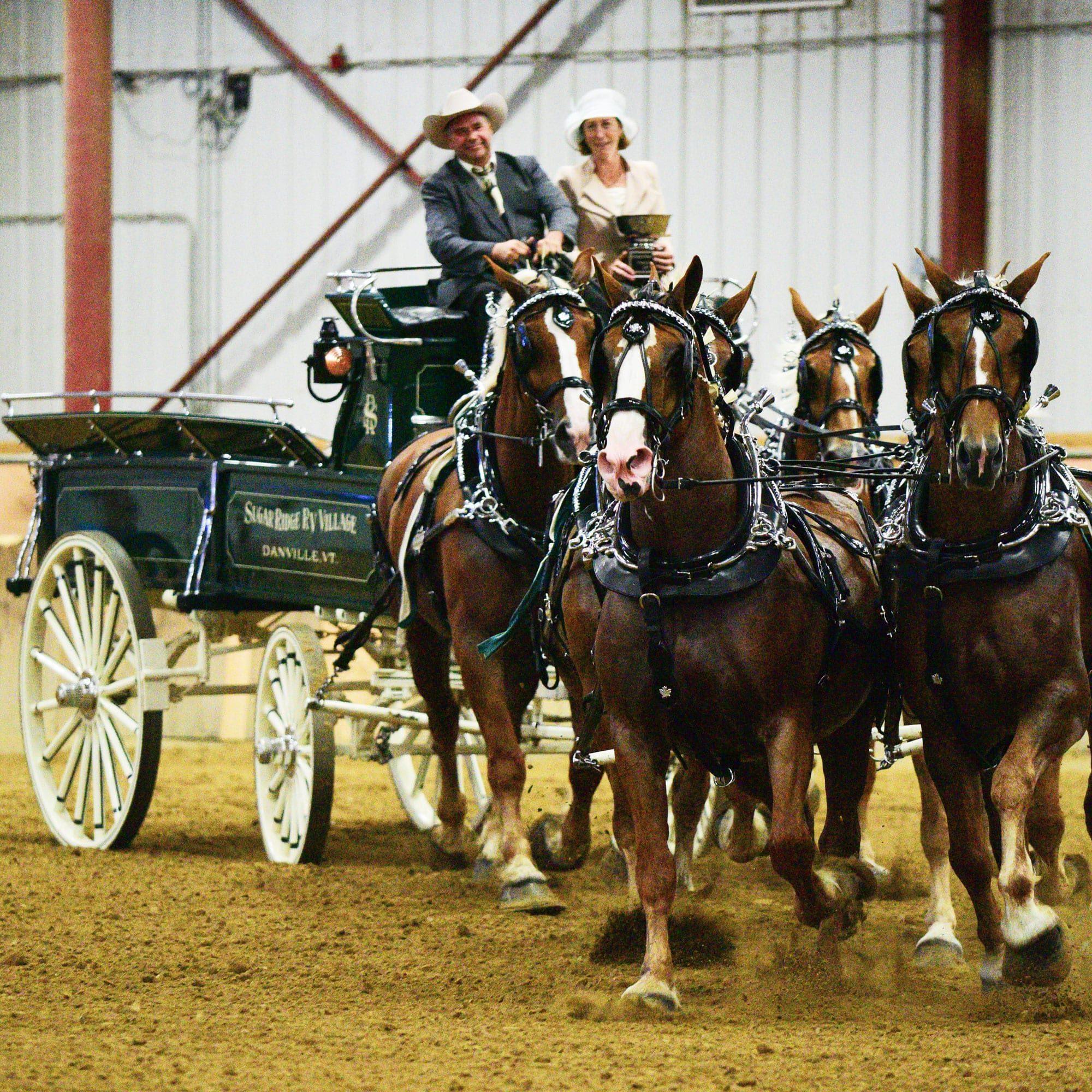 6 horse draft horse